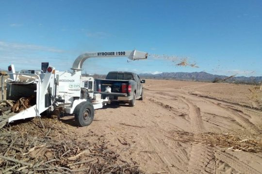 Crushing of plant material in Puerto Libertad Sonora